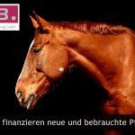 Pferde finanzieren